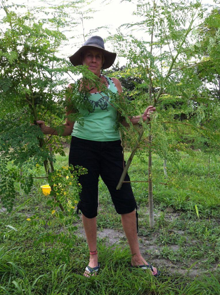 Branches Moringa Starr