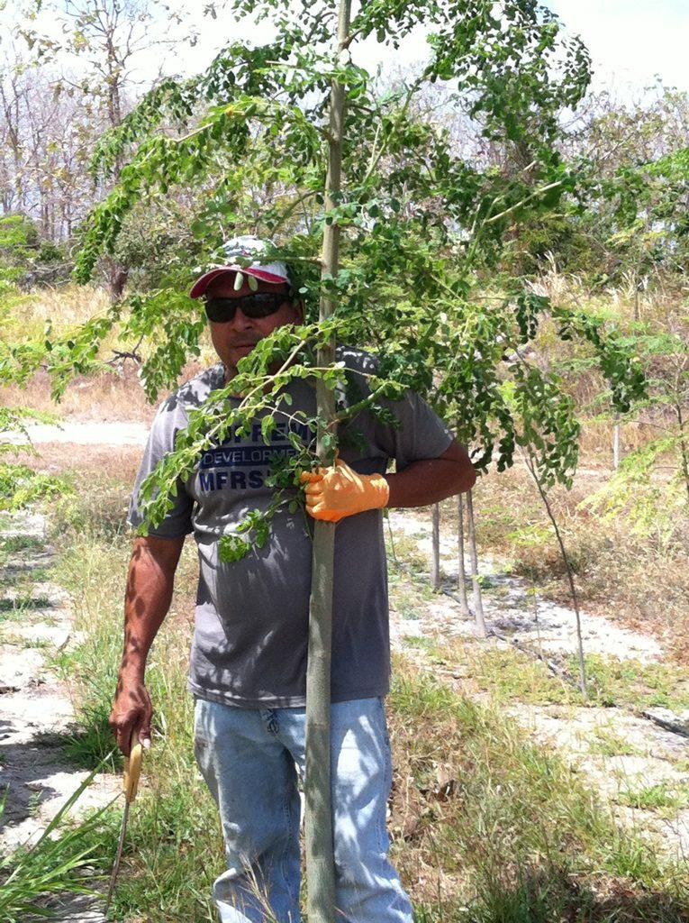 Harvest Denis Branch